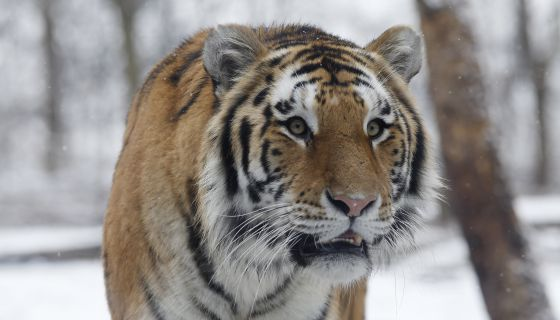 LOL: New York Hit Panic Mode When Someone Mistook This Small Critter For A Tiger