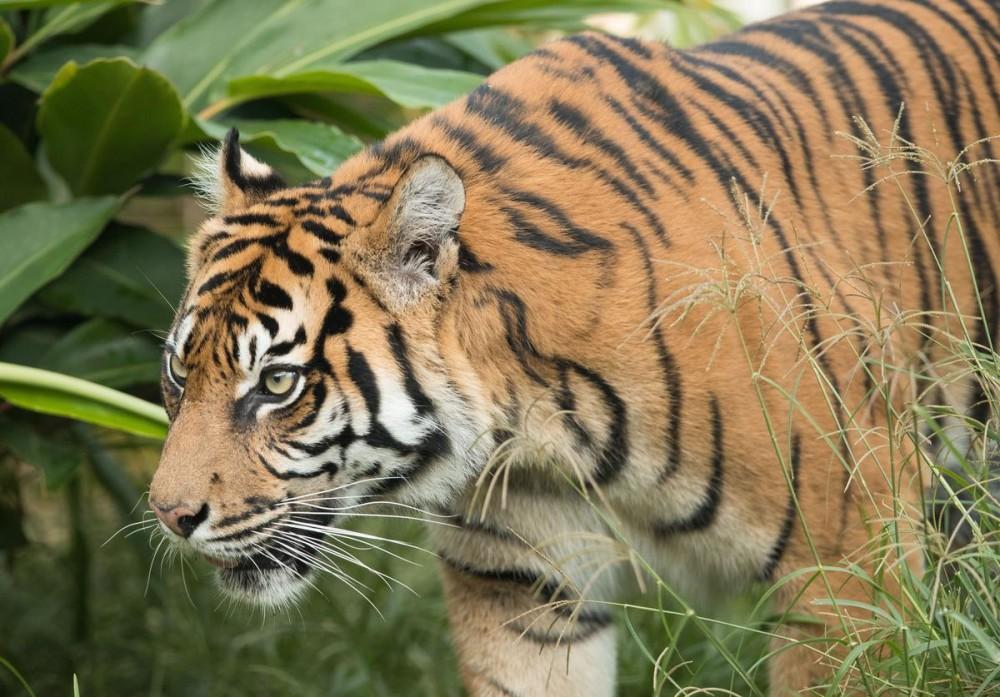 """Tiger King"" Joe Exotic Files $94 Million Lawsuit Against Feds"