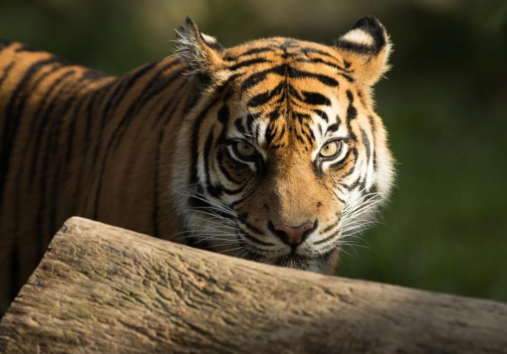 """Tiger King"" Joe Exotic In Coronavirus Isolation Behind Bars"