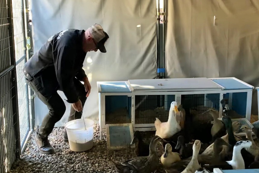 Maynard James Keenan Reflects on Spring, Feeds His Ducks in 'An Easter Story'